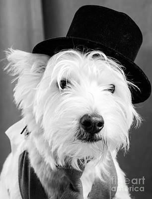 Dog Photograph - Veteran Vaudeville Stage Actor by Edward Fielding