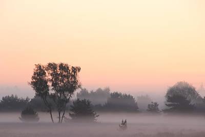 Vibrant Mist Print by Maxim Van Asseldonk