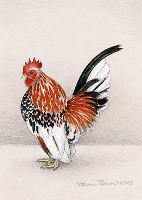 Rooster Drawing - Vichi by Katherine Plumer