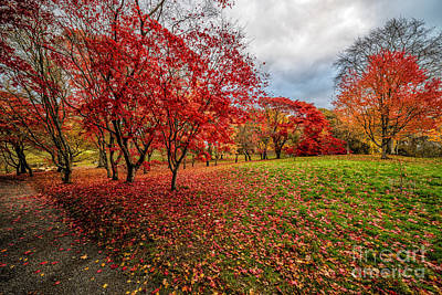Bushes Digital Art - View Of Autumn by Adrian Evans