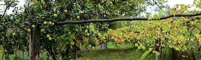Romania Photograph - View Of Pear Trees, Bradu, Arges by Panoramic Images