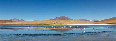 Flock Of Bird Photograph - View Of The Laguna Charcota, Potosi by Panoramic Images