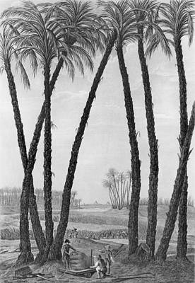 Statues Drawing - View Of The Ruins Of Memphis Seen From The South East by Jean Louis Delignon