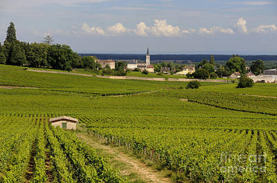 Village Of Aloxe Corton. Cote D'or. Burgundy. France Print by Bernard Jaubert