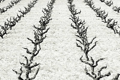 Vines Print by Frank Tschakert