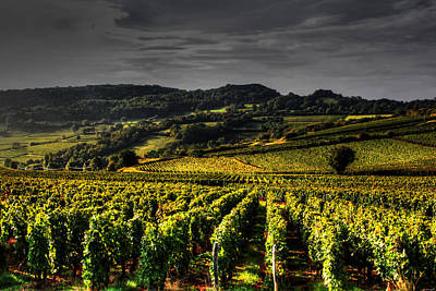 Vineyard Digital Art - Vines In France by Tom Prendergast
