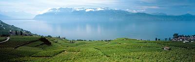 Winemaking Photograph - Vineyard At The Lakeside, Lake Geneva by Panoramic Images