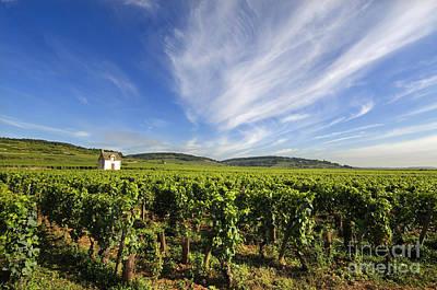 Vineyard Hut. Vineyard. Cote De Beaune. Burgundy. France. Europe Print by Bernard Jaubert