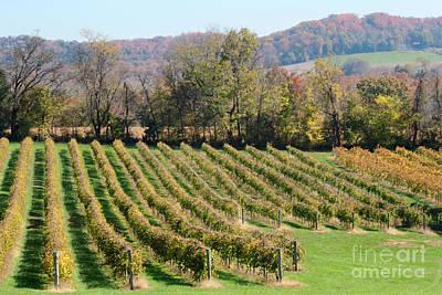 Vineyard In Autumn Print by Adam Long