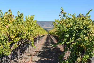 Wine Photograph - Vineyard In The Fall by Brandon Bourdages