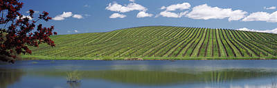 Vineyard In Napa Photograph - Vineyard Near A Lake, Napa County by Panoramic Images