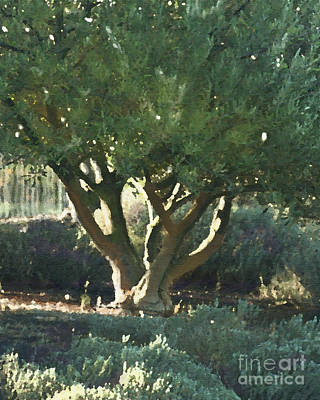 Vineyard Olive Print by Artist and Photographer Laura Wrede
