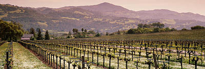 Vineyard On A Landscape, Asti Print by Panoramic Images