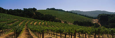 Vineyard In Napa Photograph - Vineyard On A Landscape, Napa Valley by Panoramic Images
