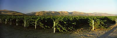 Vineyard On A Landscape, Santa Ynez Print by Panoramic Images