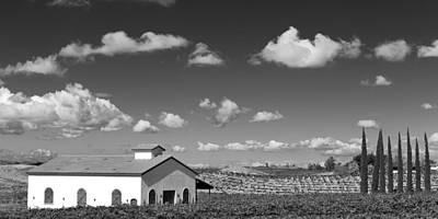 Big Wine Photograph - Vineyard by Peter Tellone