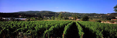 Winemaking Photograph - Vineyard, Portoferraio, Island Of Elba by Panoramic Images
