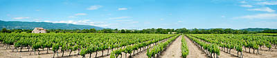 Winemaking Photograph - Vineyard, Route Dansouis, Cucuron by Panoramic Images
