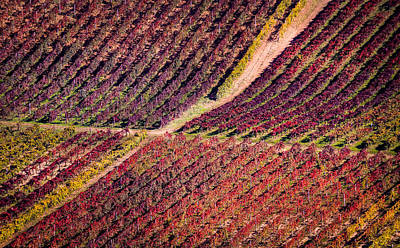 Vino Photograph - Vineyard by Stefano Termanini
