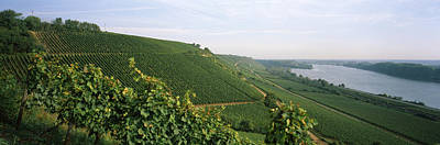 Hesse Photograph - Vineyards Along A River, Niersteiner by Panoramic Images