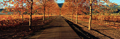 Vineyard In Napa Photograph - Vineyards Along A Road, Beaulieu by Panoramic Images