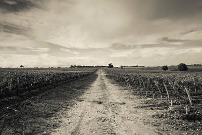 Vineyards In Autumn, Pauillac, Haut Print by Panoramic Images