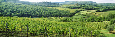 Vineyards In Chianti Region, Tuscany Print by Panoramic Images