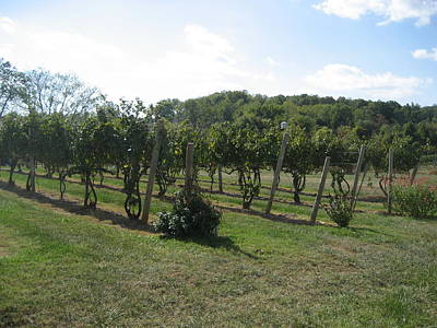 Vineyards In Va - 121251 Print by DC Photographer