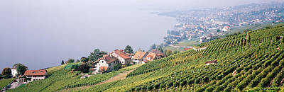 Rooftop Photograph - Vineyards, Lausanne, Lake Geneva by Panoramic Images