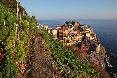 Vineyard Photograph - Vineyards Of Manarola by Susan Rovira