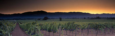 Vineyards On A Landscape, Napa Valley Print by Panoramic Images