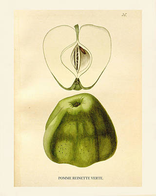 Apple Drawing - Vintage Apple by Pati Photography