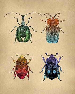 Woodcut Digital Art - Vintage Beetles Tinted Engraving by Flo Karp