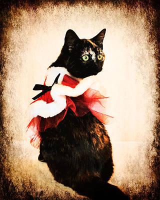 Kitten Photograph - Vintage Christmas Kitten by Jai Johnson