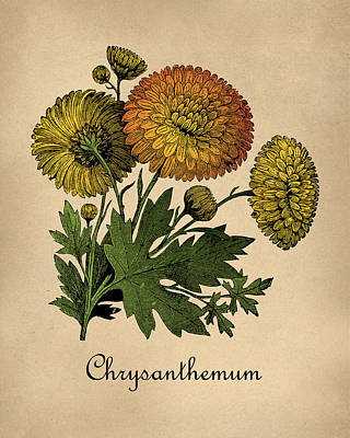 Hallway Digital Art - Vintage Chrysanthemums Botanical by Flo Karp