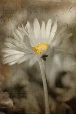 Vintage Daisy Print by Joann Vitali