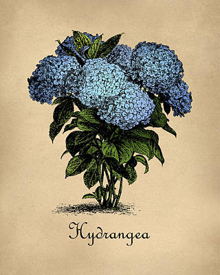 Hallway Digital Art - Vintage Hydrangeas Botanical by Flo Karp