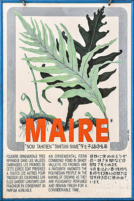 Vintage Market Sign 1 - Papeete - Tahiti - Maire - Fern Print by Ian Monk