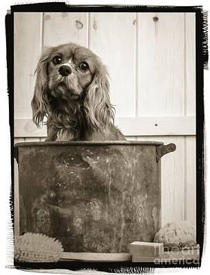 Vintage Puppy Bath Print by Edward Fielding