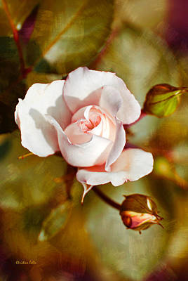 Digital Art - Vintage Rose by Christina Rollo