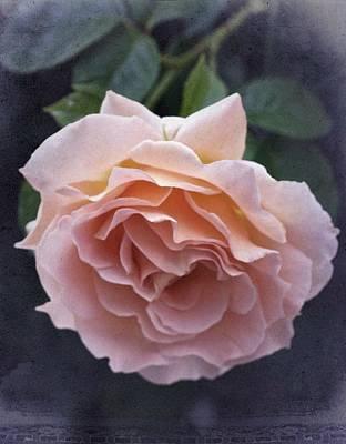 Vintage Rose No. 5 Print by Richard Cummings