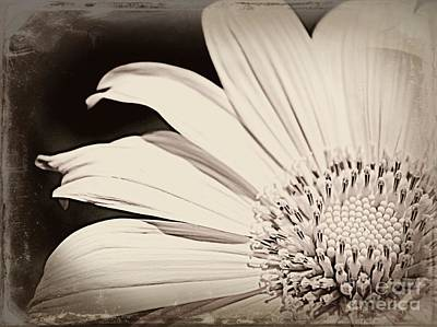 Interior Design Photograph - Vintage Sunflower by Clare Bevan