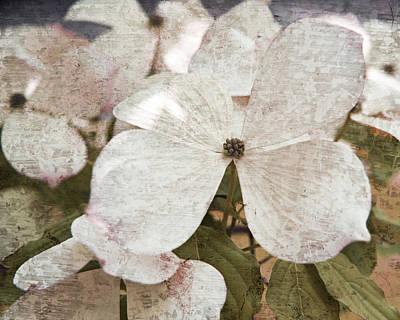 Mauve Photograph - Vintage White Flowering Dogwood by Brooke Ryan