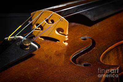 Viola Violin String Bridge Close In Color 3076.02 Print by M K  Miller