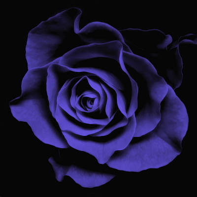 Purple Rose Photograph - Abstract Blue Roses Flowers Art Work Photography by Artecco Fine Art Photography