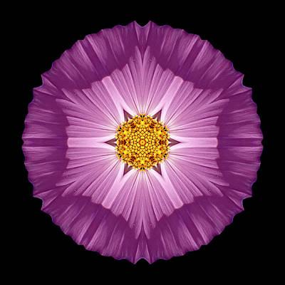 Violet Cosmos II Flower Mandala Print by David J Bookbinder