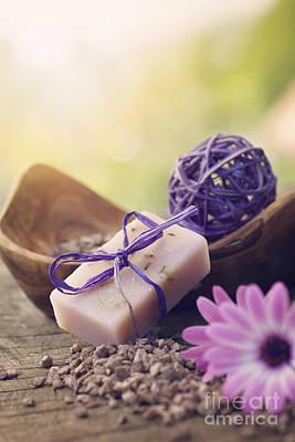 Violet Dayspa Nature Set Print by Mythja  Photography