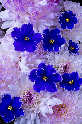 Violets And Mums Print by Garry Gay