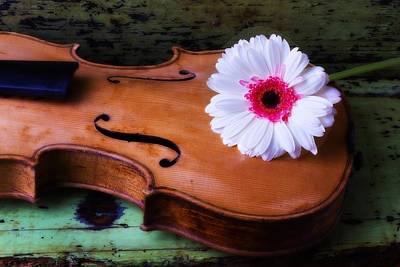 Beaten Up Photograph - Violin With White Daisy by Garry Gay