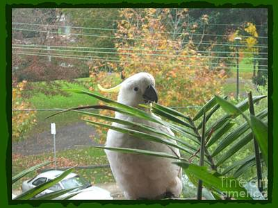 Cockatoo Mixed Media - Visitor On My Balcony by Leanne Seymour